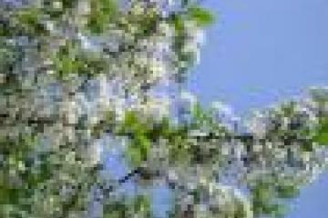 1 нче май - Яз һәм Хезмәт бәйрәме, 9 нчы май - Җиңү көне - эшләми торган бәйрәм