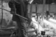Россия техникумнарында гамәли бакалавриат кертелә