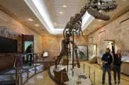Татарстанның табигать тарихы музее балаларны Яңа ел бәйрәменә чакыра